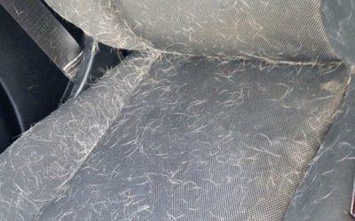 Loại bỏ lông thú cưng ra khỏi nỉ xe ô tô nhanh chóng