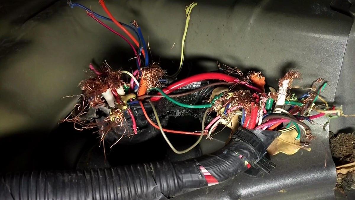 chuột cắn dây điện xe ô tô